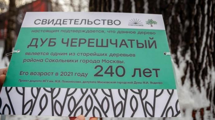 Старейший дуб в «Сокольниках» может получить специальный паспорт