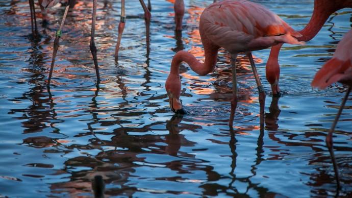 В Московском зоопарке вылупились птенцы фламинго