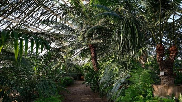 В Ботаническом саду пройдет фестиваль любителей чая