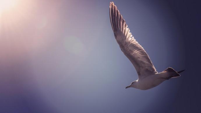 Птицы снова помешали российскому самолету взлететь