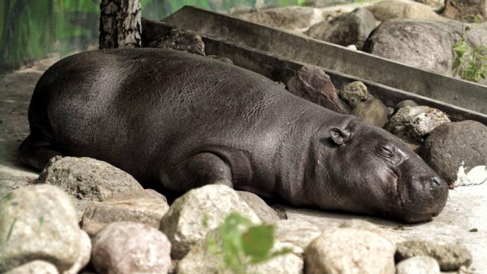 В Московском зоопарке открывается сезон утренних посещений