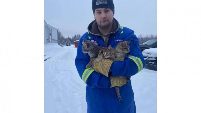 Канадец спас трех котят, вмерзших в снег в поле