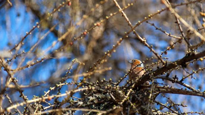 В парках Москвы отметят День птиц