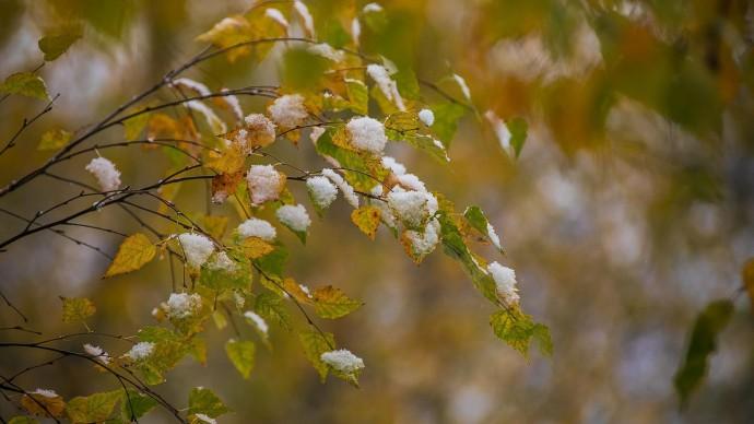 Синоптики рассказали о первом снеге в Москве