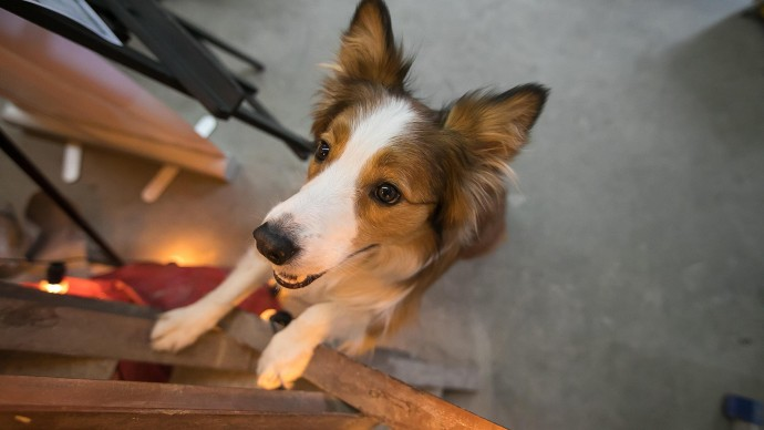 Фестиваль «Мой пес — супергерой»
