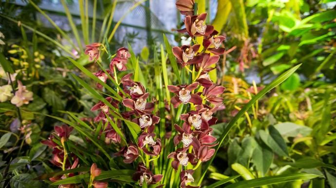 В Ботаническом саду МГУ продолжается выставка тропических орхидей