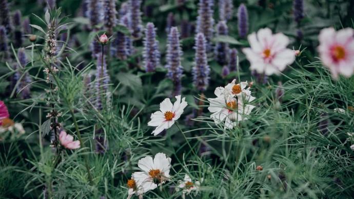 В парке на Ходынке пройдет бесплатная лекция по цветоводству