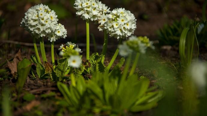 Первый в России тактильный сад откроется в «Аптекарском огороде»