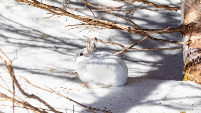 В парках Москвы появились подкормки для лосей, косуль и зайцев