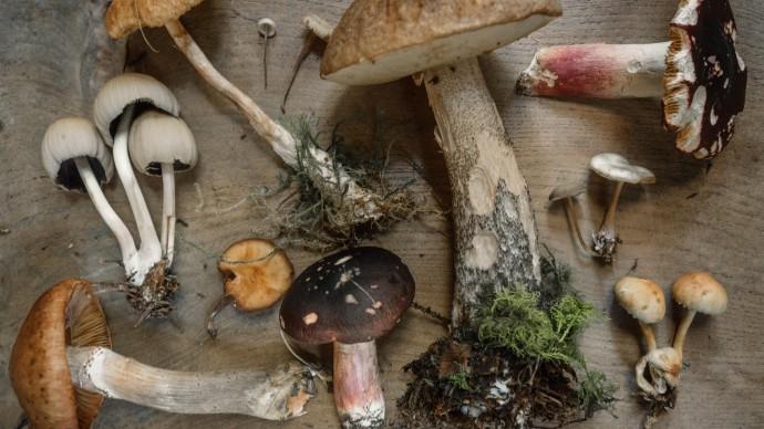 «Аптекарский огород» приглашает на Фестиваль грибов