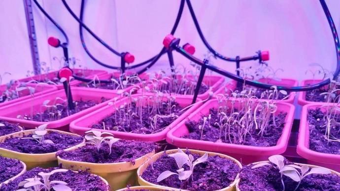 «Аптекарский огород» представит чудо-технику для умного выращивания