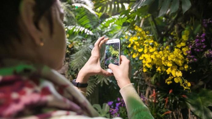 В «Аптекарском огороде» расцвела необычная орхидея «яйцо в гнезде»