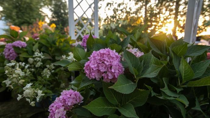 Moscow Flower Show проведет онлайн-вебинар по ландшафтному дизайну