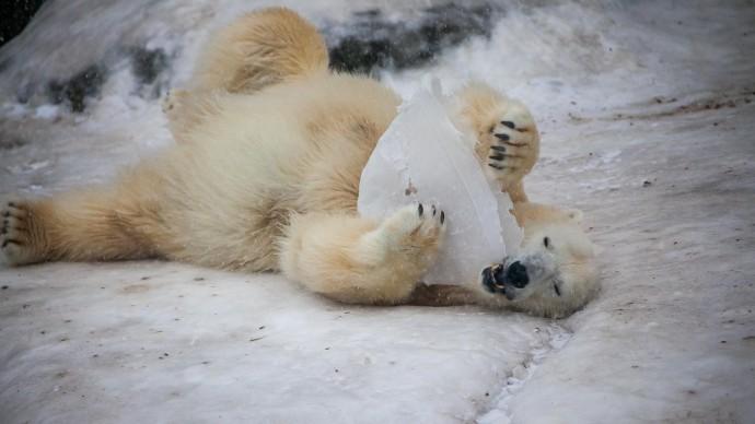 В Московском зоопарке впали в спячку первые животные