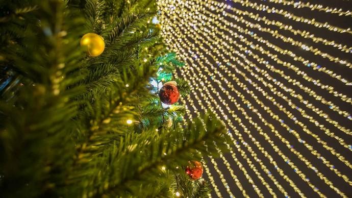 В Санкт-Петербурге принимают новогодние елки на переработку