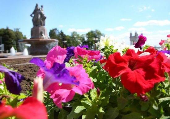 На клумбах города распустились тюльпаны, петунии, бегонии и бархатцы
