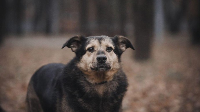 В «Сокольниках» проведут выставку собак из приюта