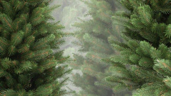 В Москве увеличили число пунктов приема елок на переработку