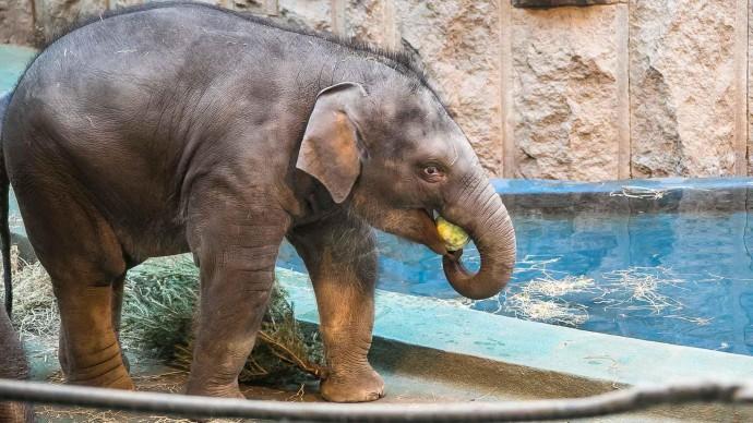 Московский зоопарк сделает скидку на входные билеты 31 декабря