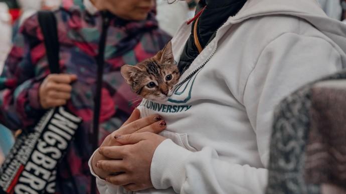Коты помогают справиться с сезонной депрессией
