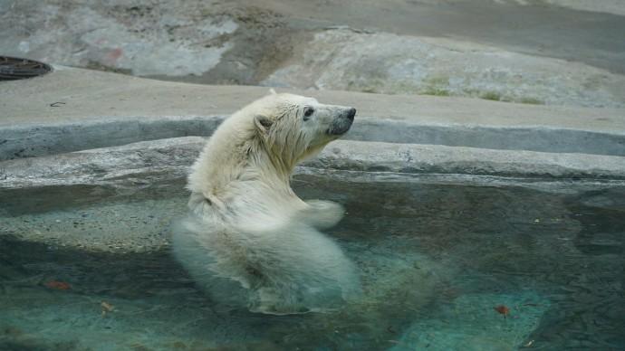 В Московский зоопарк прибыл белый медвежонок, спасенный на острове в Красноярском крае