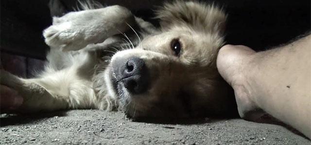 В Московском зоопарке пройдет лекция о бездомных собаках