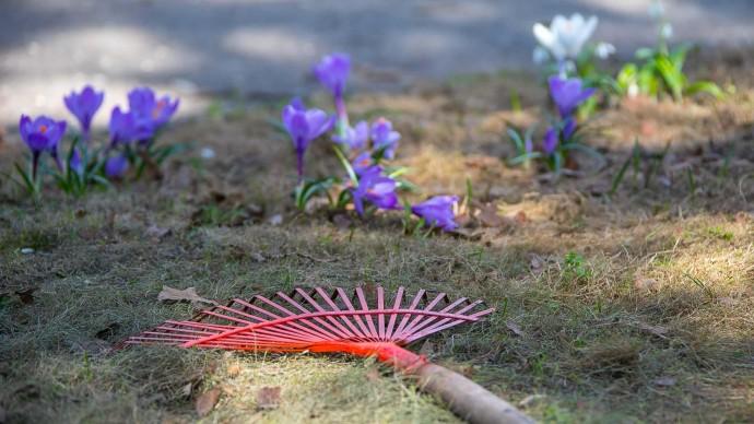 Субботник в саду Баумана