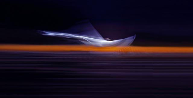 В «Эрарте» покажут фотографии лебедей