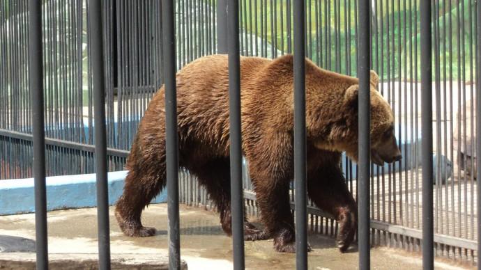 В парке «Швейцария» закрыли зоопарк