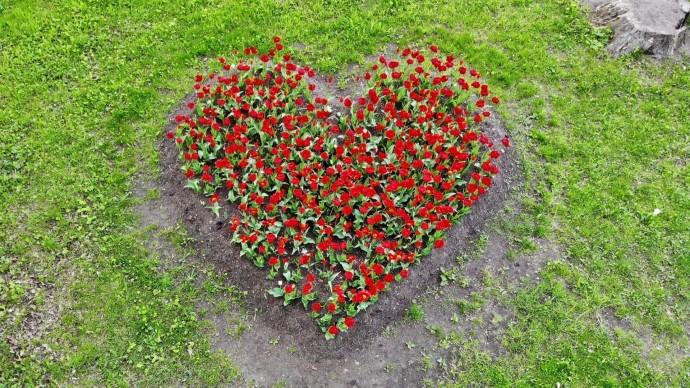 На Елагином острове расцвел тематический цветник ко Дню защиты детей