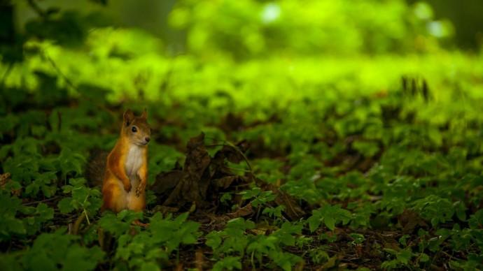 В Санкт-Петербурге пройдет Фестиваль заповедной природы