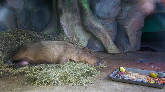 В Московском зоопарке запустили аудиогиды