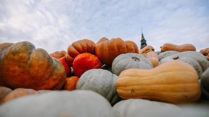 На Даниловском рынке устроят фестиваль «Если любишь тыкву»