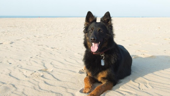 МВД обновило список опасных пород собак