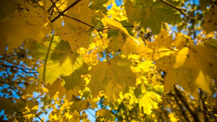 Опавшую листву превратят в удобрения для растений