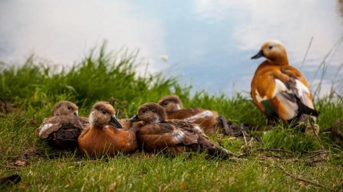 В Екатерининском парке пройдет семейный фестиваль