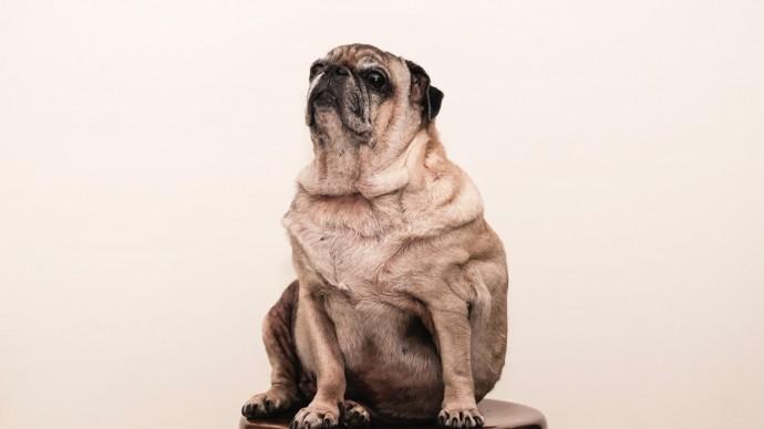 Диетологи рассказали, почему от стресса можно набрать вес