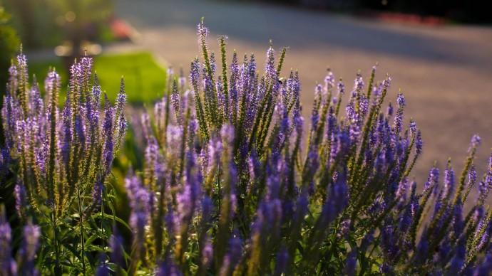Ботанический сад Канта переходит на зимний режим работы