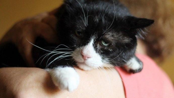 В Москве нашли самого грустного кота