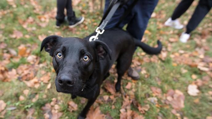 В Лианозовский парк привезут приютских собак