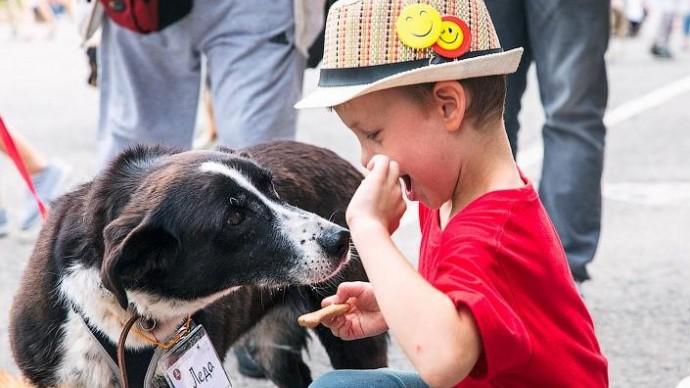 В «Садовниках» пройдет фестиваль бездомных собак