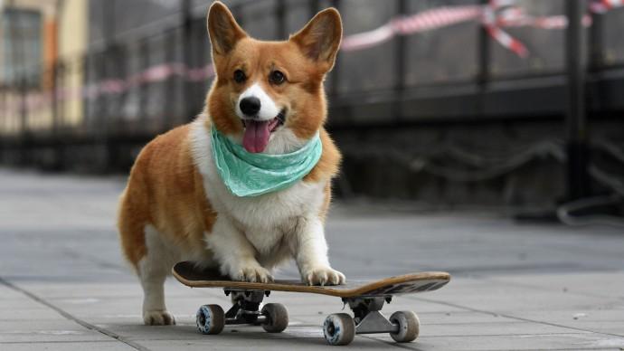 В Центре Artplay Media пройдет Pet-friendly Day
