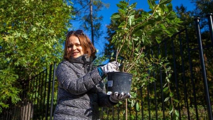 Парк «Сокольники» восстановят после летних ураганов