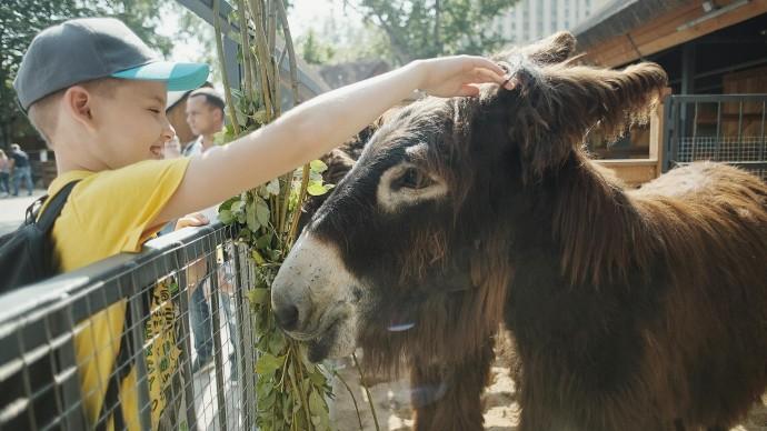 В Московском зоопарке после ремонта открылась детская территория