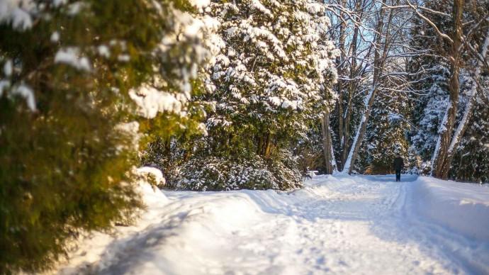 Новогодний экофест пройдет в Казани