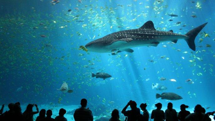 В «Москвариуме» поселился акулий скат