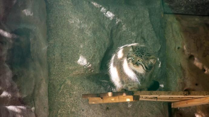 В Московском зоопарке продолжается «Кошачья неделя»