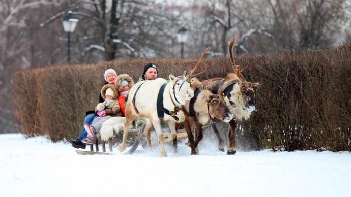 В «Царицыно» можно покататься на оленьих нартах и собачьих упряжках