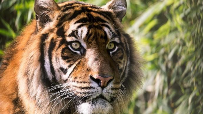 В Приморье построят укрытия для съемок диких животных
