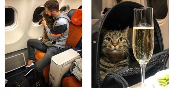 «Аэрофлот» лишил пассажира премиальных миль за перевозку слишком толстого кота